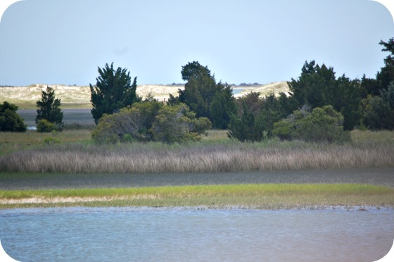 Summer North Carolina Shores Wild Horses in Beaufort NC