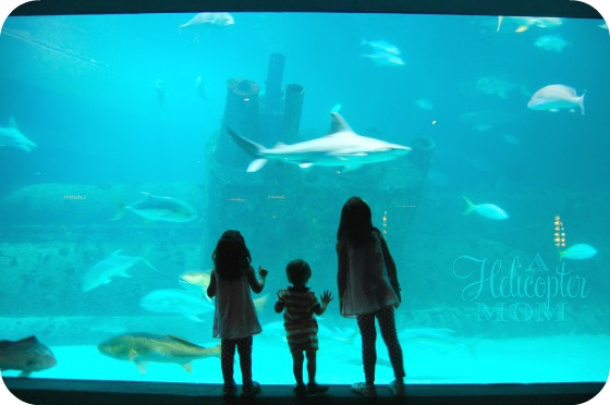 Summer Vacation Destination NC Aquarium