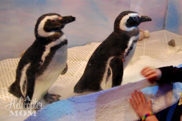 Busch Gardens Christmas Town Penguins