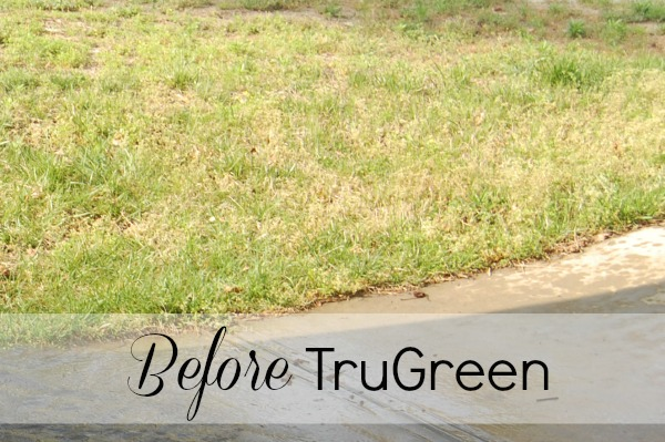 TruGreen Before And After Our Experience A Helicopter Mom