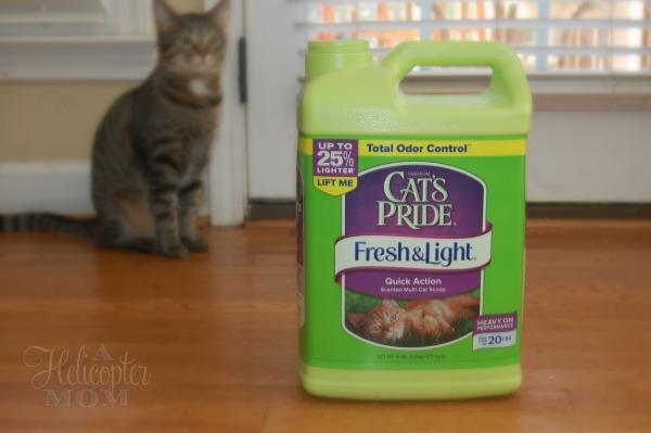 Our Cat's Pride
