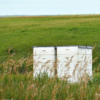 The Story of Honey – My Trip To An Apiary