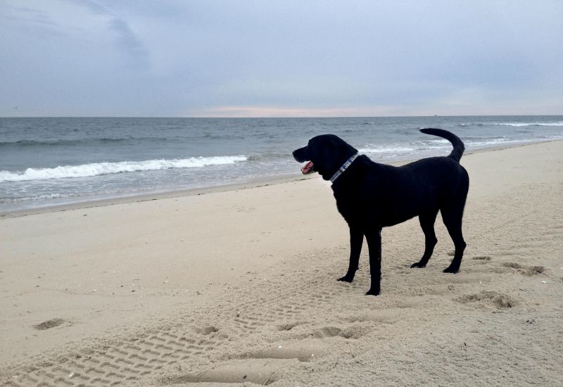 Lily and the Waves