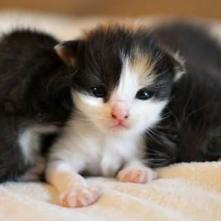 Great American PETtogether – Share Your Pet Love