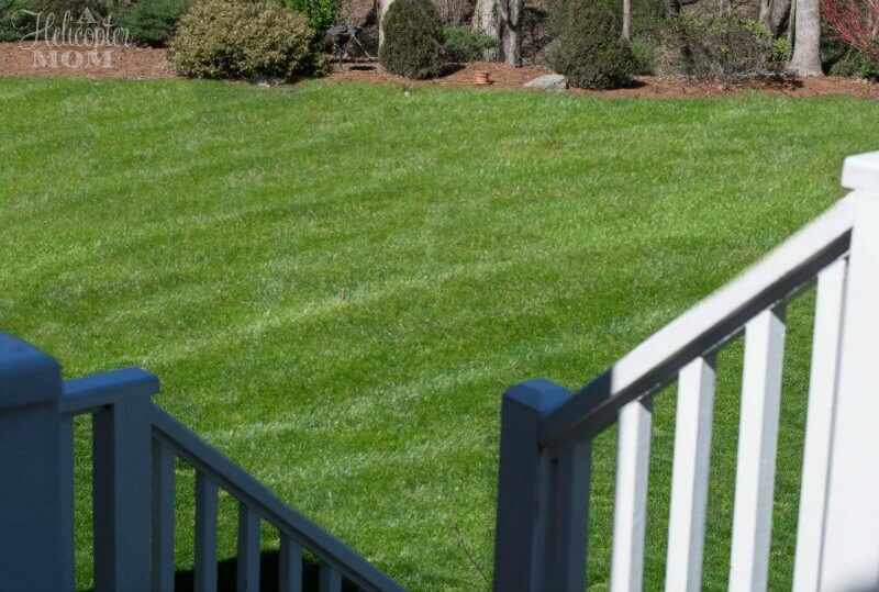 Spring Lawn Care - Back Yard