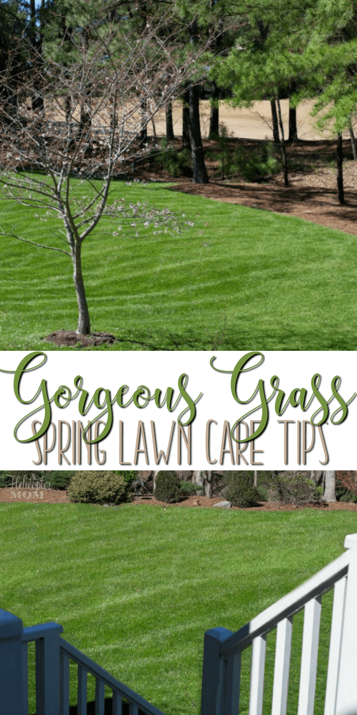 Spring Lawn Care Tips - how to get green grass in your yard