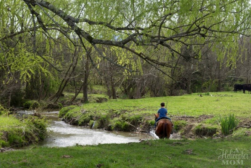 Family Activities in Pigeon Forge - Horseback Riding